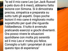 Leo (jack russel 6 mesi)
