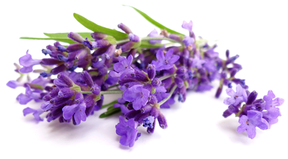 Velas perfumadas, velas decorativas, aromalife nature, velas aromaticas, velas, eventos, regalos