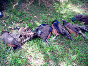 有害鳥獣の定期的駆除では外来種の数が増えている(資料写真)