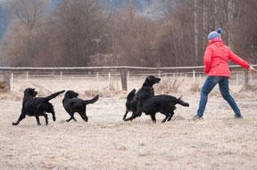 beim Spielen mit meinen Hunden