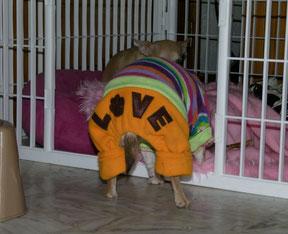 Duree gestation chien