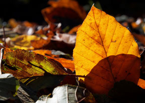 Herbst. Foto: Maiken Winter