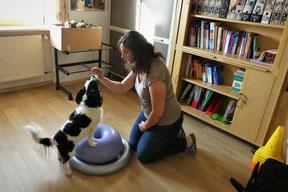 Kräftigung der Muskulatur der Hinterpfoten bei Hund Sina