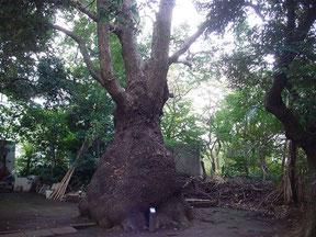 玉川神社のとっくりグス
