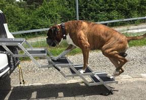Auch große und schwere Hunde können die Hundetreppe problemlos nutzen