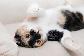 Besser als eine Katzenpension weil die Tierbetreuung im Raum Nürnberg vor Ort erfolgt!