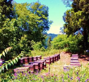 歴史の町、長野市松代町の豊かな自然の中で養蜂業を営んでおります。