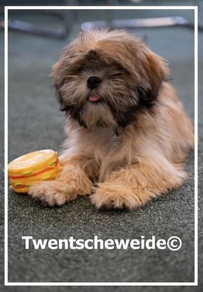 Boomer-pups-overijssel