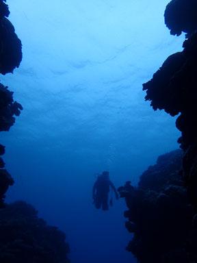 石垣島でのんびりダイビング「プチナイトダイビング」ヒートハートクラブ