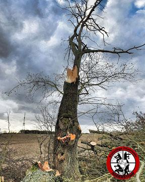Der Baum startet mit schlanker Figur in den Frühling