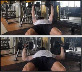chest exercise dumbbell chest press