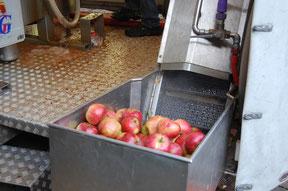 Ladung Äpfel vor der Verarbeitung im Saftmobil