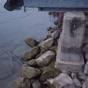 Felchen, Bielersee, Fischen, Gambe, Hegene, Renke, angeln, Felchenrute, Fischreiher, Filet, Fischerei