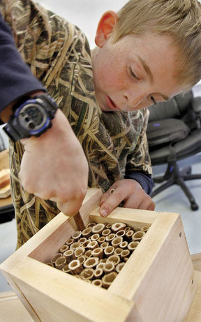 Fifth-grader Brody Stone squeezes in one more piece of Japanese knotweed stalk into the bee house he constructed at Vilas Middle School on Tuesday under the guidance of Michael Nerrie, chief environmental observer of Distant Hill Gardens in Walpole.