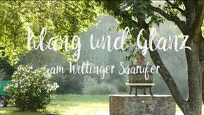 Saarweingut Felix Weber, Saar-Riesling-Roots, Jungwinzer Saar
