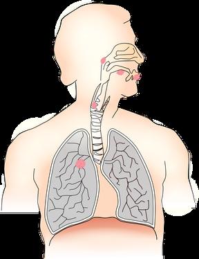 Honig hilft bei Bronchitis