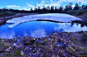 「水辺2―水芭蕉」   写真  356x432mm