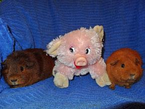 """Zenzi und Lieschen als """"Glücksschweinchen"""" ^^"""