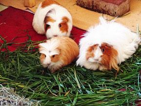Unsere drei Ladies: Isi, Kathi und Christl^^