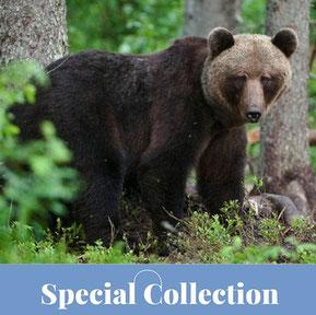 Special Collection: Estland – Wildnis im Baltikum