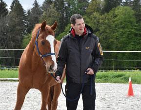 Schnuppercoaching mit Pferden by horse-coaching-team.ch