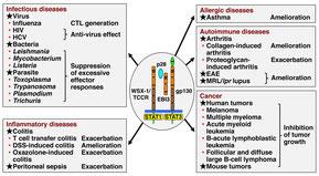 IL-27は炎症誘導作用と抑制作用の両方の機能を有する