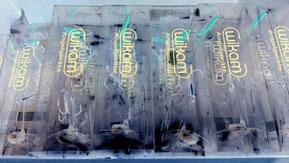 Köderfischsystem - Schleppangeln