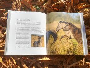 """Wildpferde Hengste in freier Wildbahn - Buch """"Im Kreis der Herde"""" von Marc Lubetzki"""
