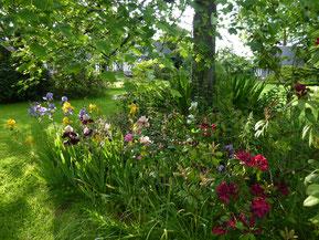 Les hibiscus du jardin romantique début août