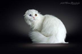 Elzar Cameron Lemberg Cats  SFS w 63