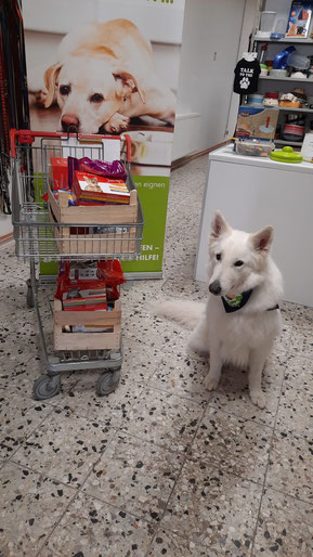 weißer Schäferhund mit Einkaufswagen voller Tierfutter