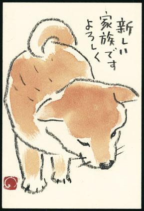 イヌ 柴犬 子犬