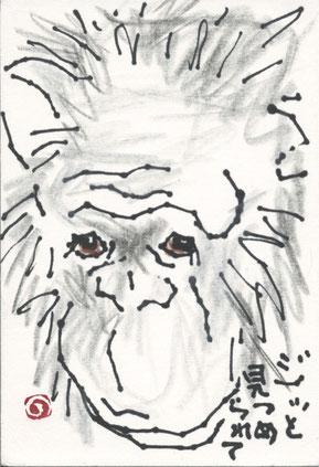 チンパンジー 顔