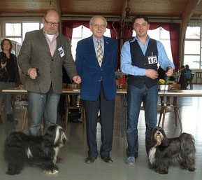 BOB Steinhausen 2014 Tibet Terrier Adominos ToJo's Apeel at DW