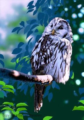 フクロウ,リアルイラスト,日本の野鳥