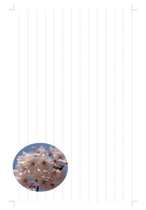 桜の便箋(ワンポイント)