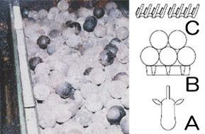 チャーグロー 左側:グローボール 右側:構造図