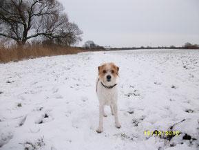 Deetje unterwegs im Schnee