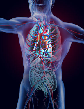病気・腰痛・肩こり、高血圧なども含めて整体で改善を目指すのは循環