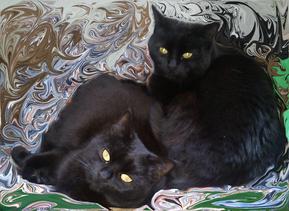 zwei schwarze Katzen schlafen nebeneinander