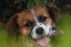 Hunde auf El Hierro