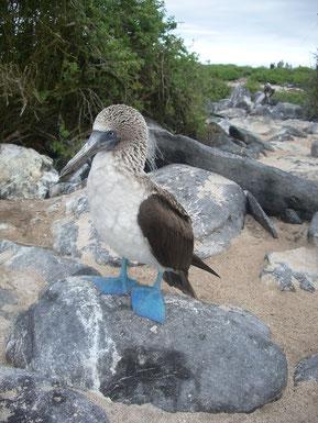 Eine Tour nach Galápagos ist ein unvergessliches Erlebnis
