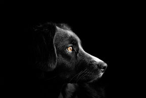 honden-hond-puppy-pup-shampoo-conditioner-parfum-parfume-zalf-halsband-leiband-natuurlijk-dierverzorging