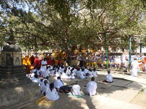 Bodh Gaya Bodhisattva Tree