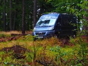 mitten im Wald - in Polen - unser Stellplatz
