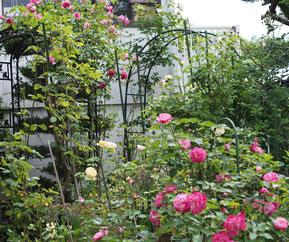 庭はこんな感じに咲き始めました('15.5.20)