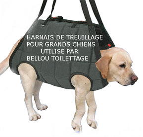 harnais de treuillage bellou toilettage