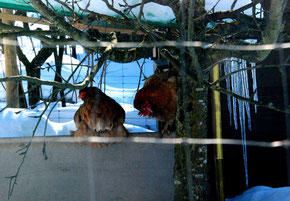 11. Februar 2015 - Wann kommt endlich kommt der Frühling?