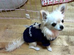 和のセーター