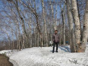 藻岩山の白樺林と残雪